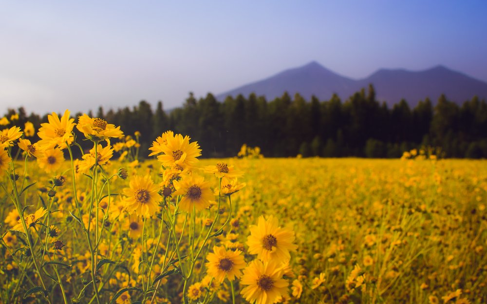 Our 10th annual meeting will be held in beautiful Flagstaff, Arizona at Northern Arizona University (Photo by Kevin Horstmannon Unsplash)