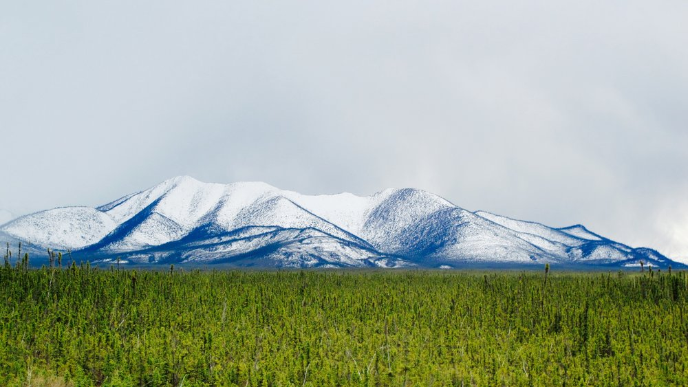 The Great Yukon Tundra.