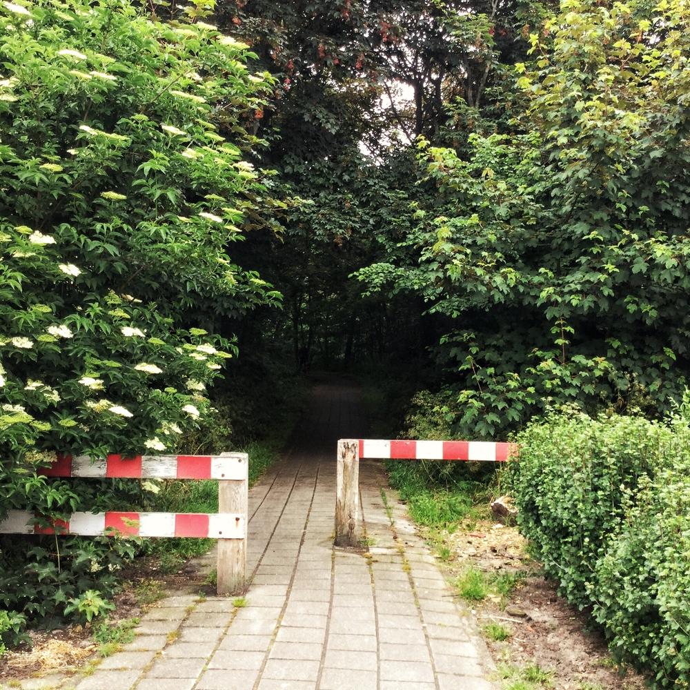 """.כניסה לשביל הליכה שמתחיל ב""""יער"""" ומסתיים בדיונות"""