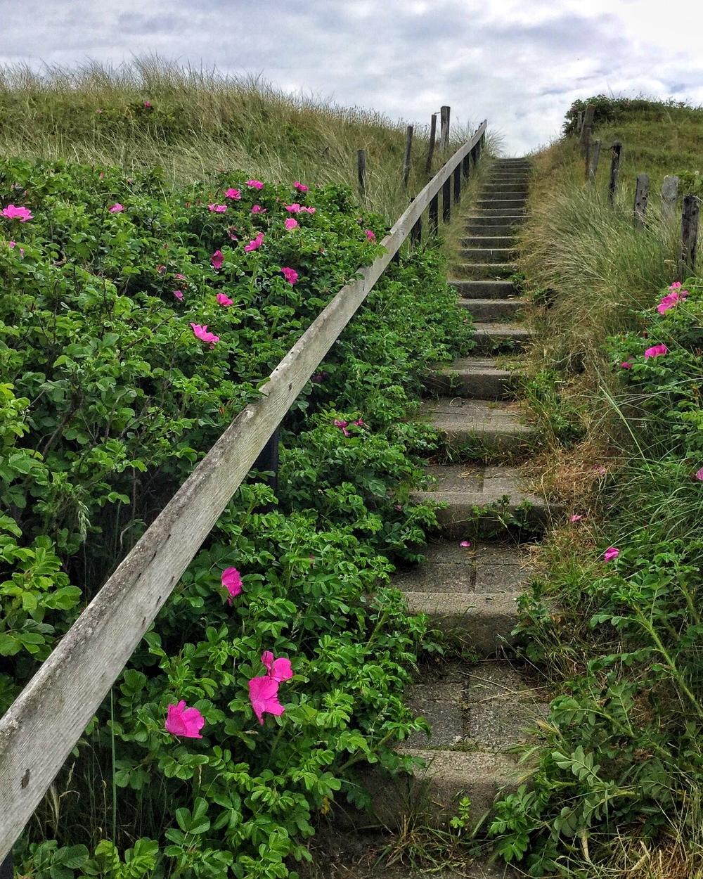 שביל כניסה של אחד הבתים בדרך מן החוף לכפר.חבל שאי אפשר להעביר את ניחוח הפרחים בתמונה...