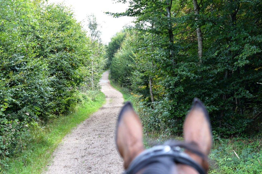 6 km Lange Sandwege durch den Kerschlacher Forst