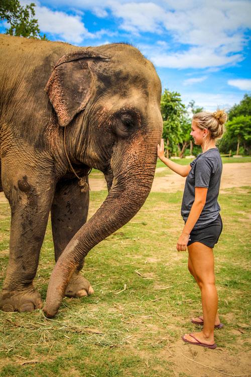 elephant-kanchanaburi.jpg