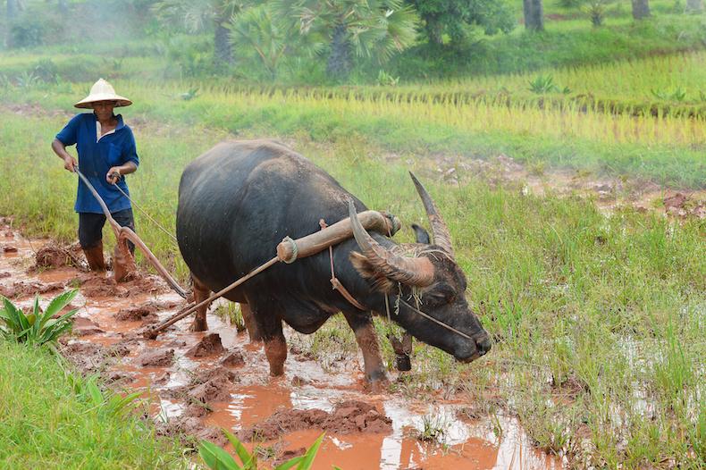 Hoang Lien Son.jpg