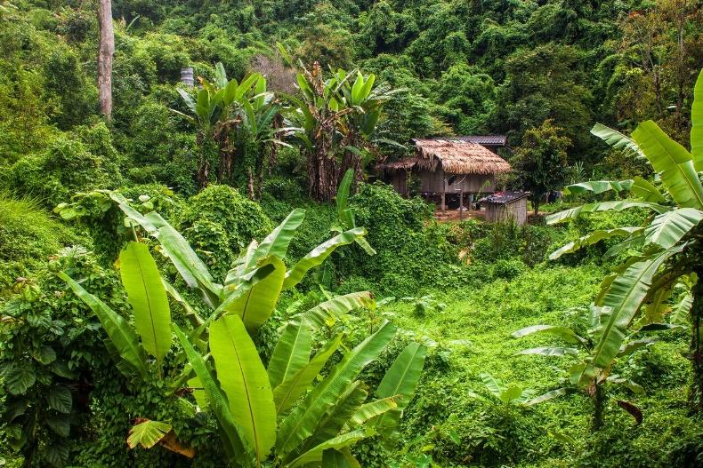 Jungle Trek in Asia