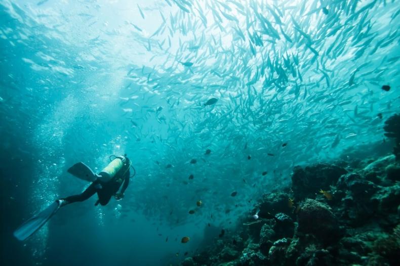 Scuba Diver swimming through waters of Bali.