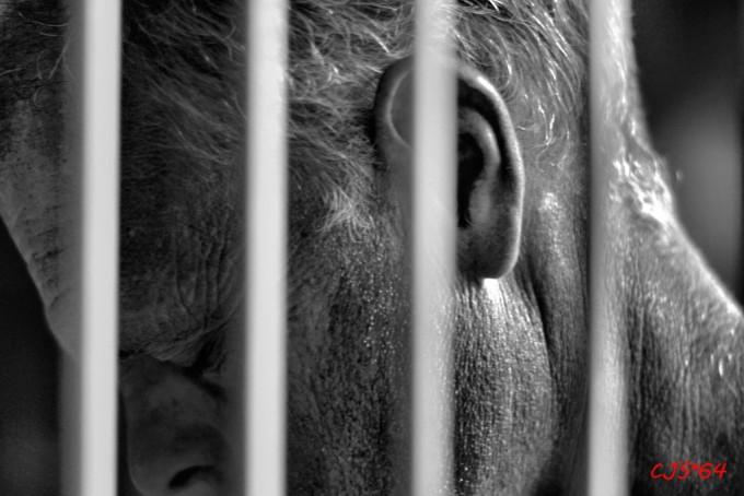 jail-680x454.jpg