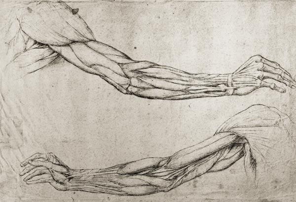 Leonard de Vinci - Etude de bras