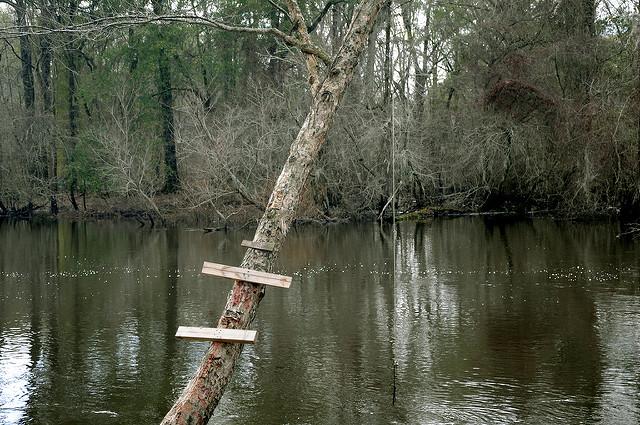 Photographs courtesy of Brian Brown,  Vanishing South Georgia