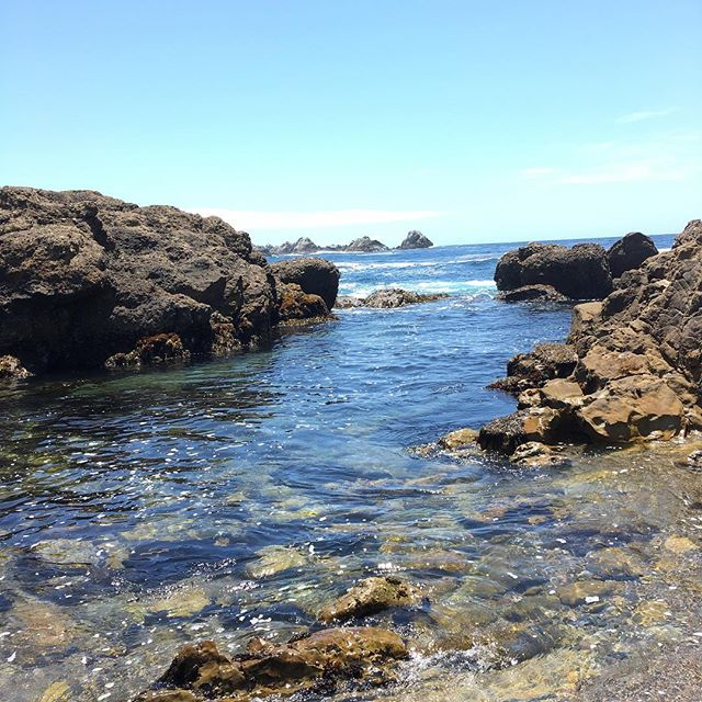 We got to see Point Lobos today! Last time we came to Carmel, we had to pass on seeing this state park because we had Mochi with us. It was gorgeous today!