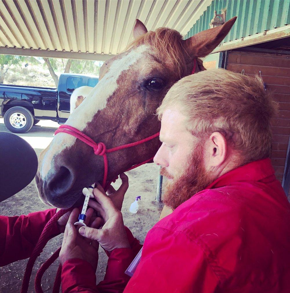 Horsemanship Day IMG_4613.JPG