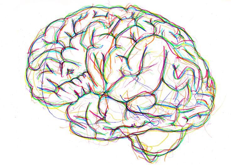 brain-1300479__340.png