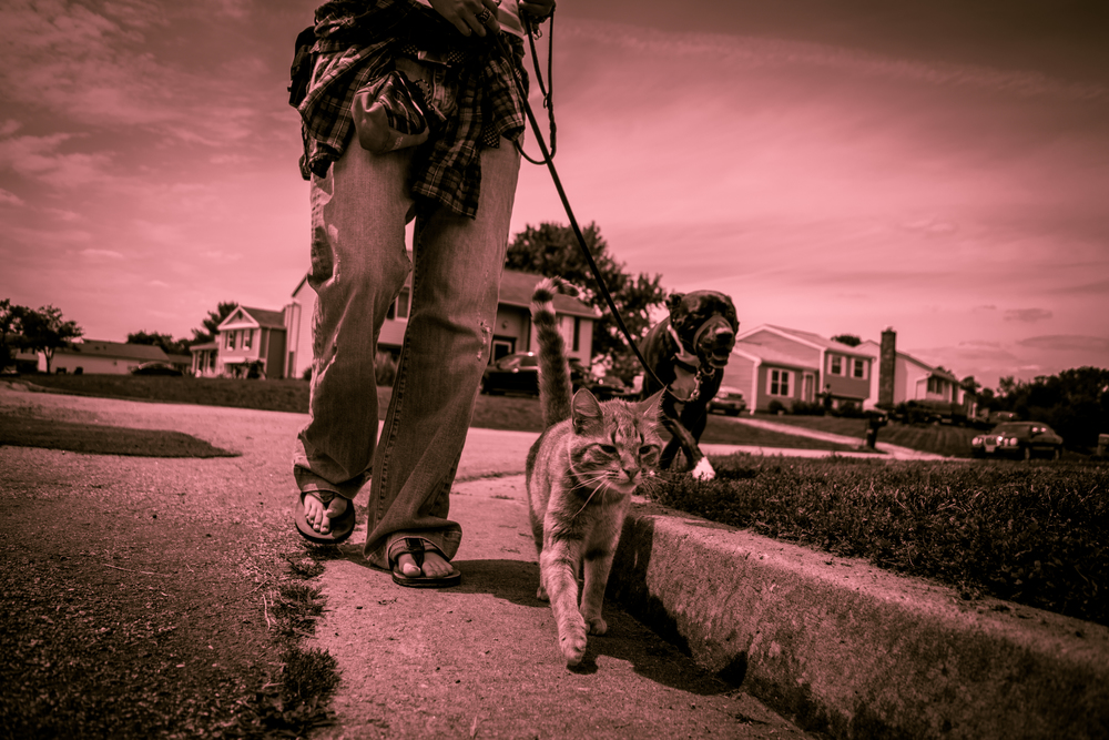 Bridging the gap     between people and their pets