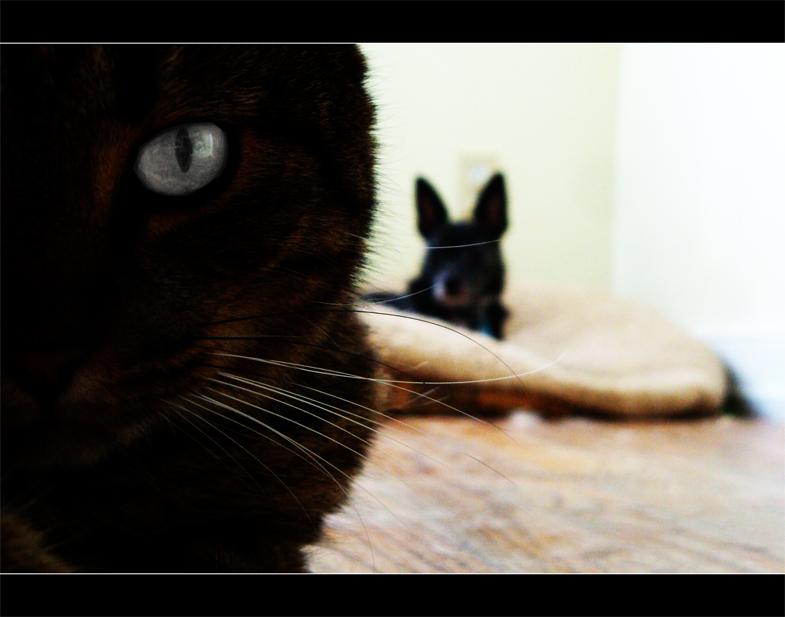 rolandcat.jpg