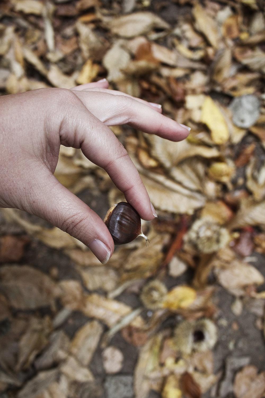 chestnut_hand.jpg