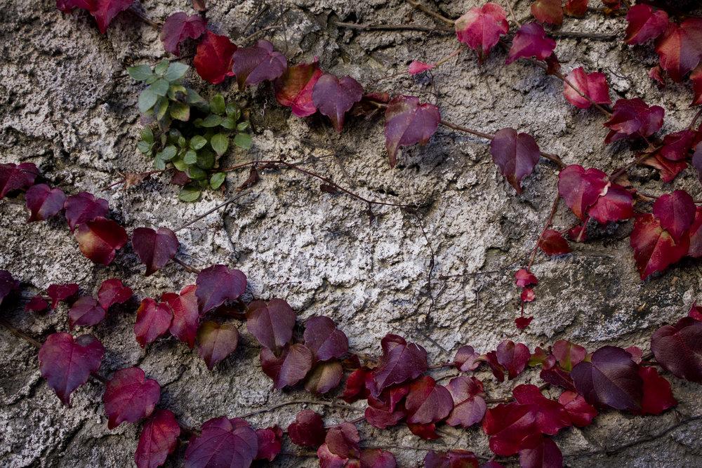 red_vines.jpg