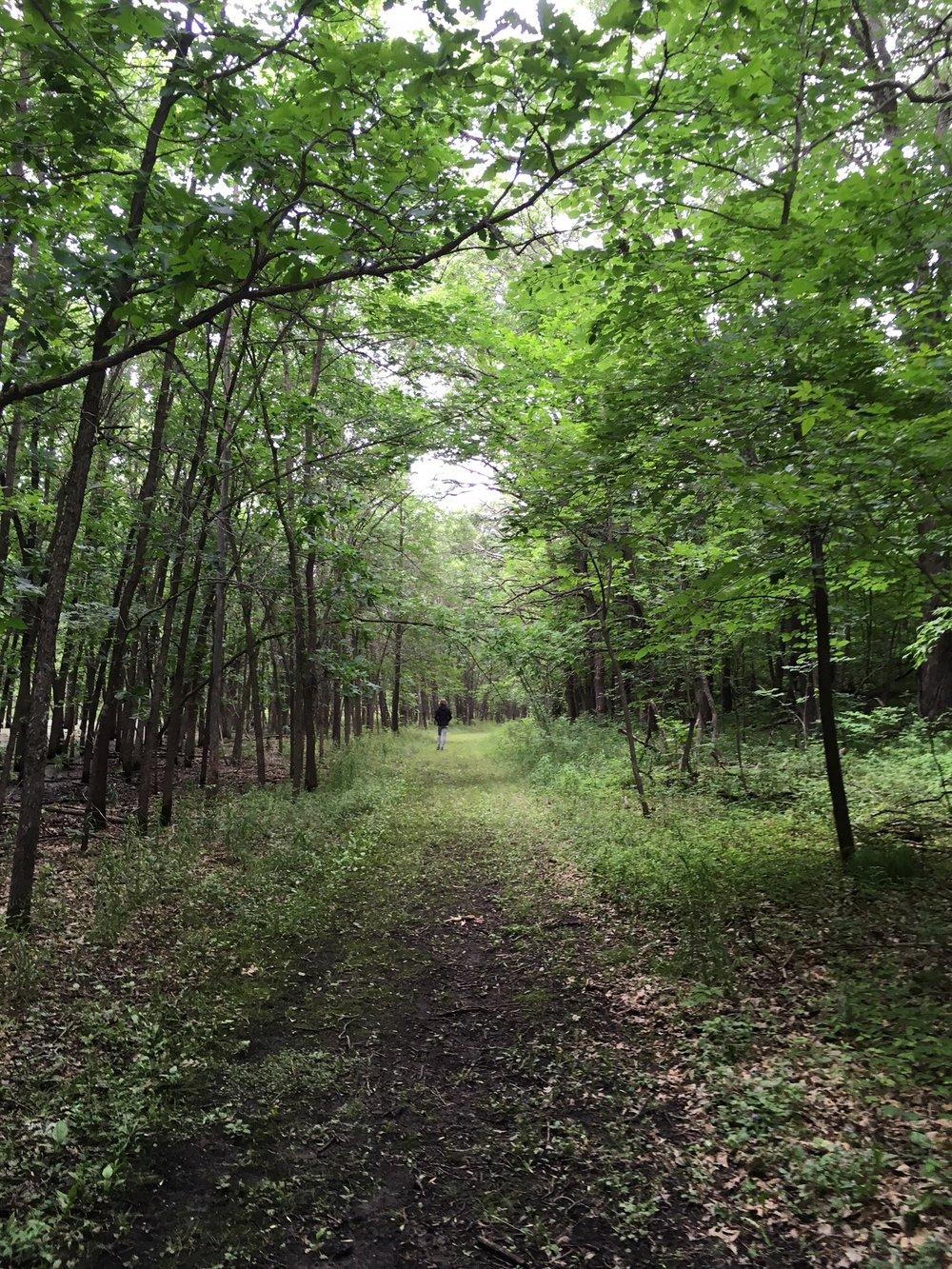 forest photo 3.jpg