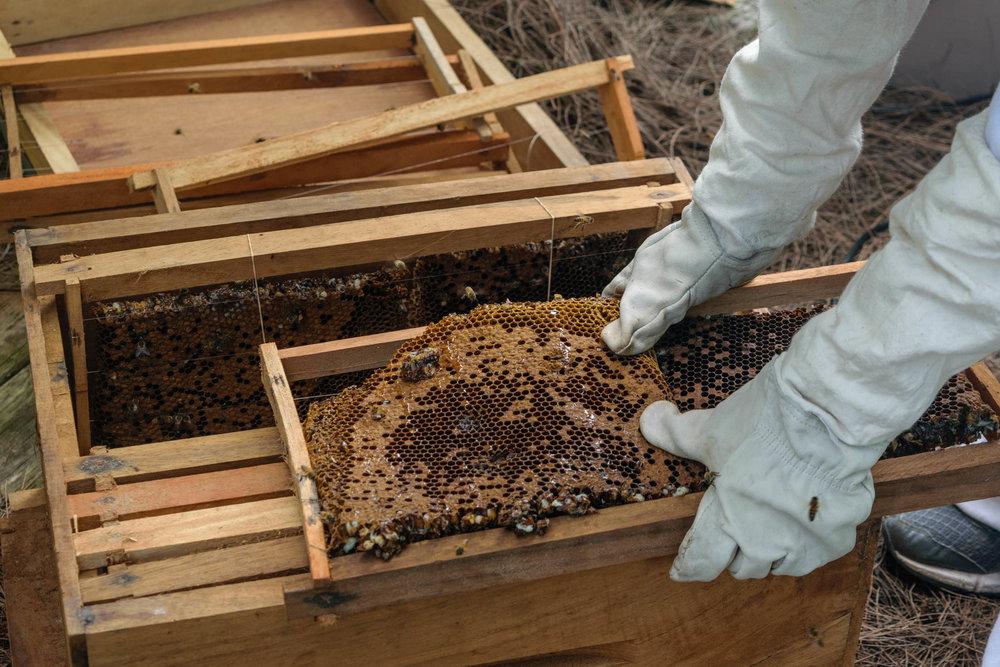 CSD Bees_02.jpg