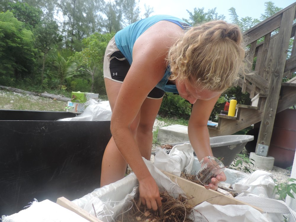 Kelly collects samples of soil and wood chips for preliminary testing of the glycerol and pH levels in the soil.