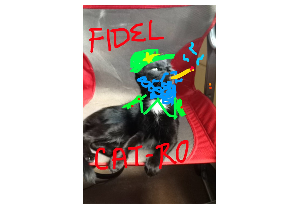 Fridel Catro.jpg