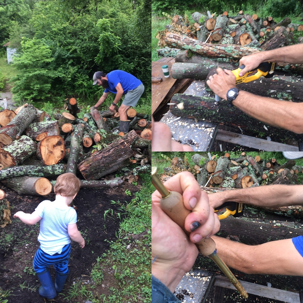 Hudson and son from Knock on Wood tree service inoculating elm and hickory with  Piopinno  and  King Oyster  mushrooms.