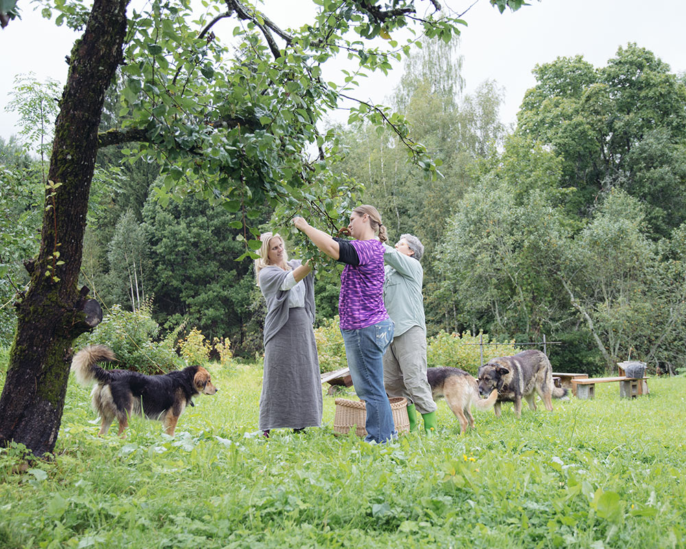 Evita, Melissa and Sara harvesting apple tree leaves.