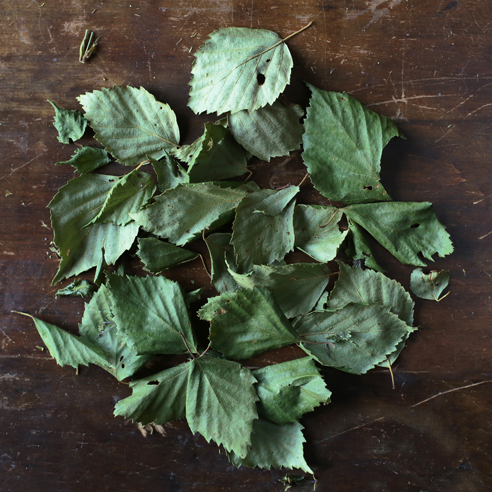 Birch Leaf aromatic and earthy with a subtle wintergreen flavor