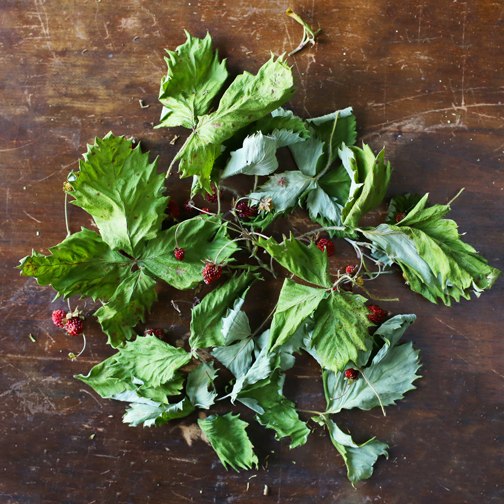 Wild Strawberry Leaves mild and fruity with fresh, grassy undertones