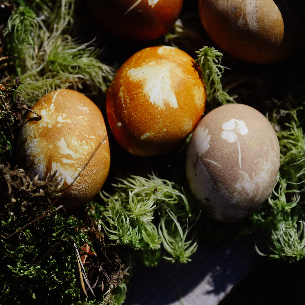 Lauku Tea Blog // Easter Eggs Dyed with Tea, Flowers and Leaves