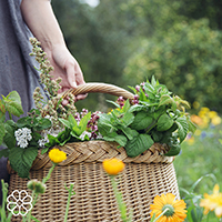 Evita Lukina with a basket full of herbs and flowers