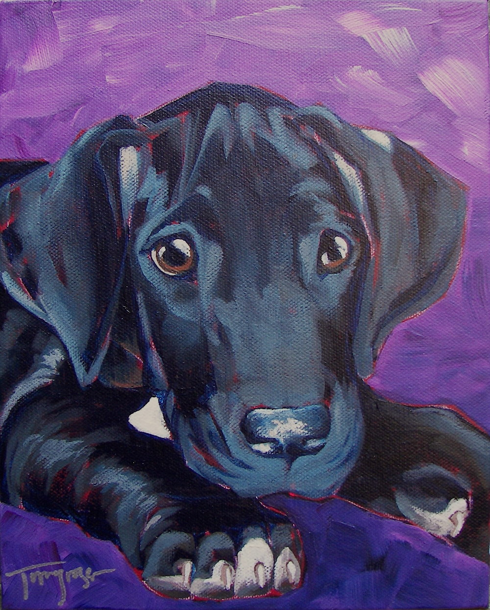 "Great Dane Pup - 8""x10"""