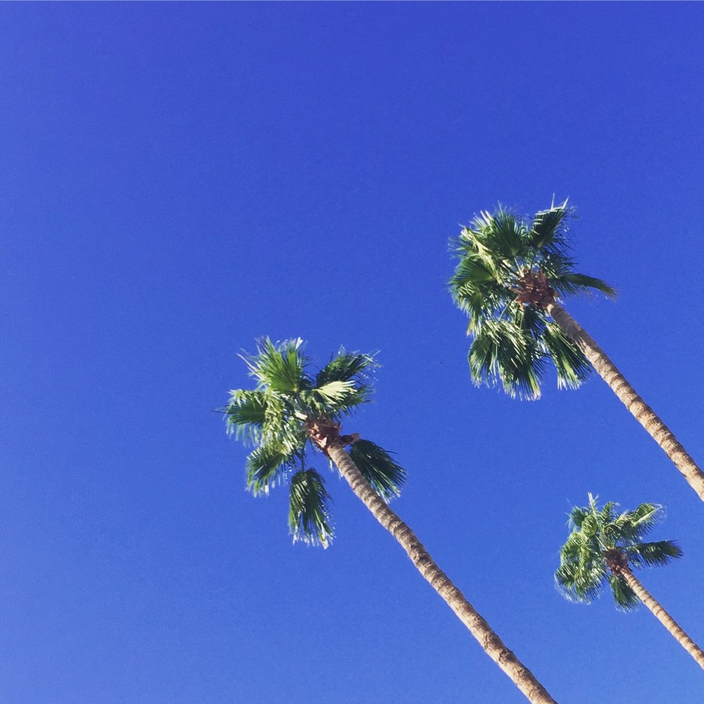 *standard palm tree image*