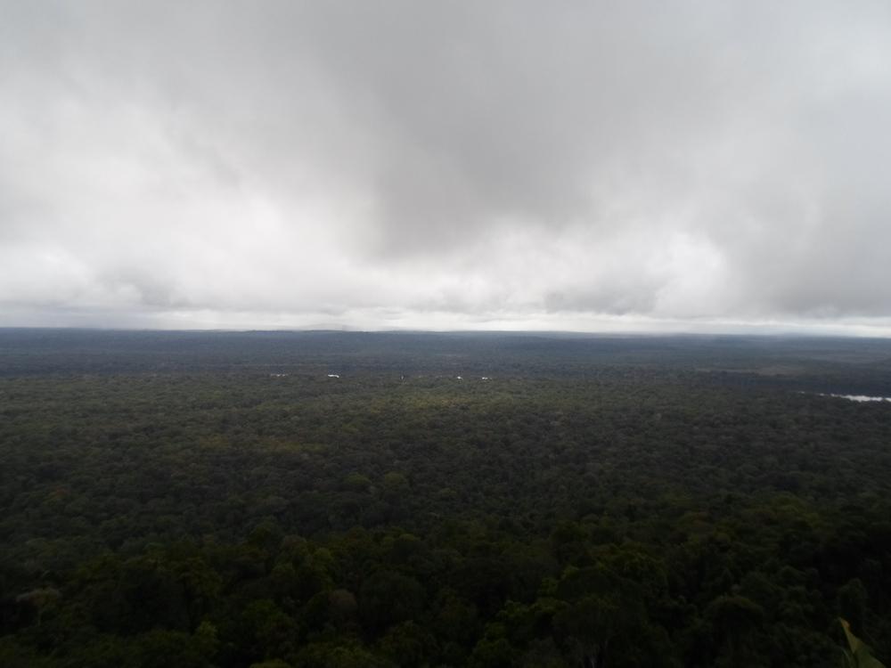 Iwokrama Forest, Guyana