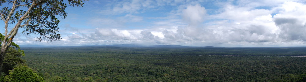 """""""Apparently, I was lucky"""" - Panoramic view of the Iwokrama rainforest"""