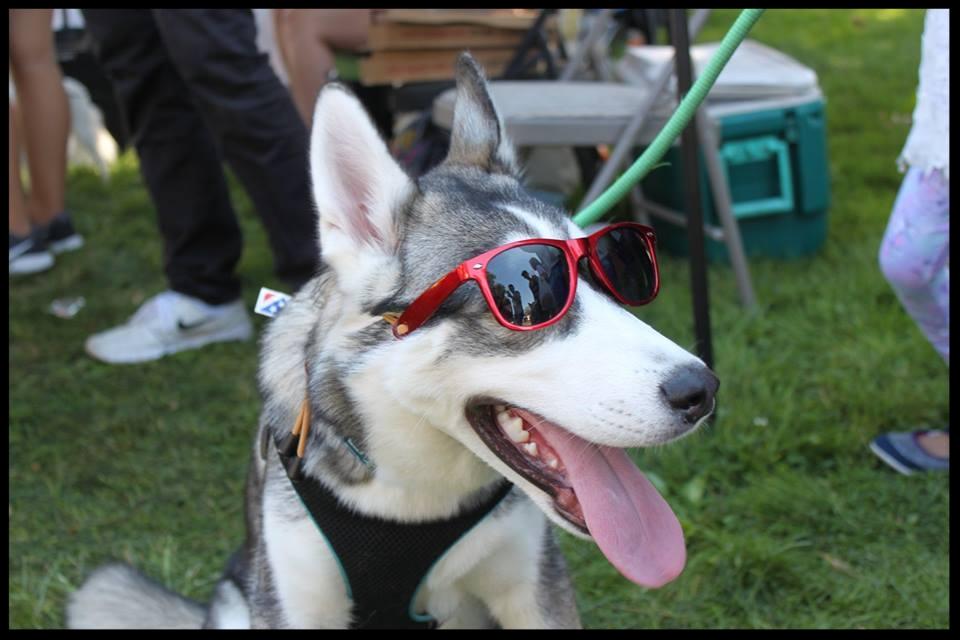 husky in red chrome.jpg