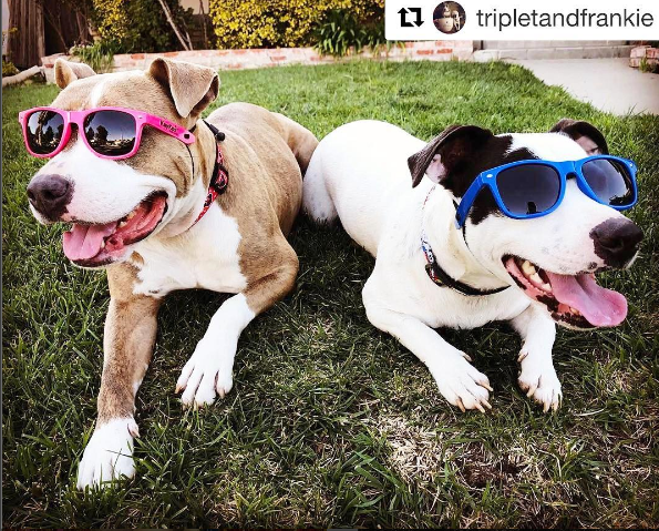 two pits with large glasses.PNG