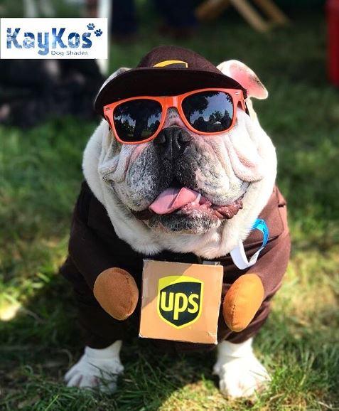 ups bulldog.JPG