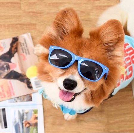 hawaii dog medium blue.JPG