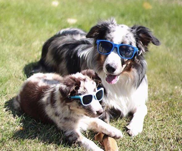 old dog and puppy small blue medium blue.JPG