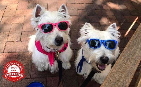 twin white dogs pink and blue medium.JPG