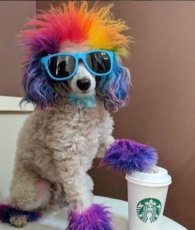 starbucks dog small blue.JPG