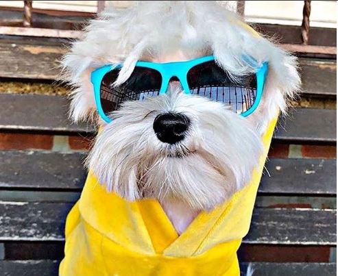 yellow sweater small light blue shades.JPG