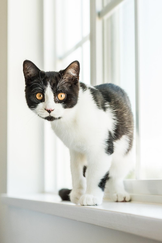 Cats-03.jpg