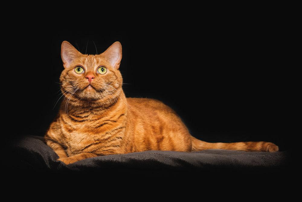 Cats-06.jpg