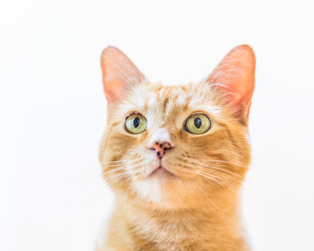 Cats-08.jpg