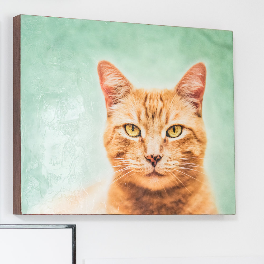 Cats-10.jpg