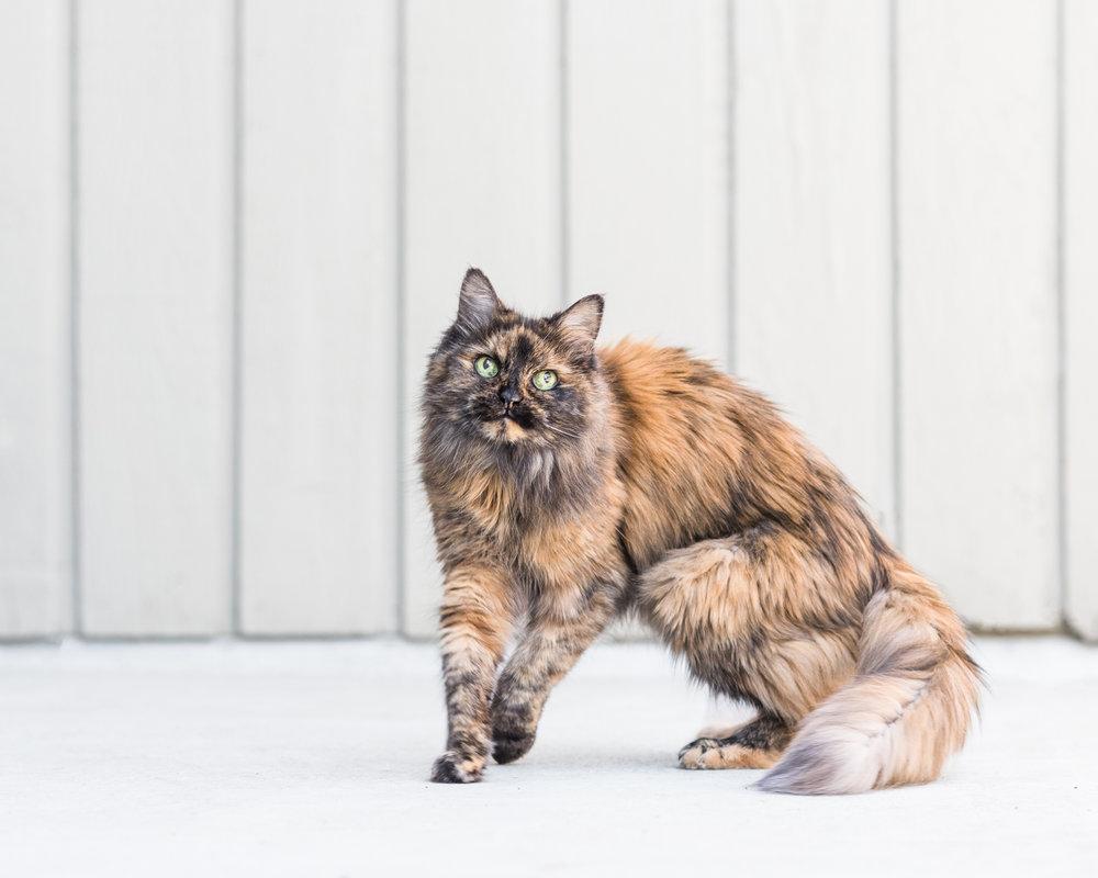 Cats-13.jpg