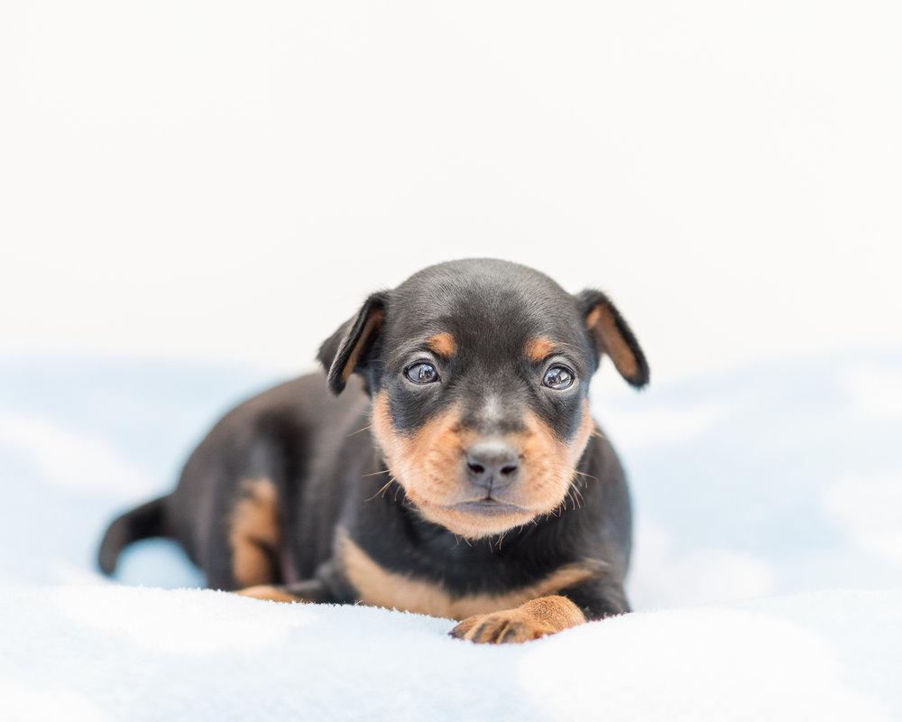 Puppies-06.jpg