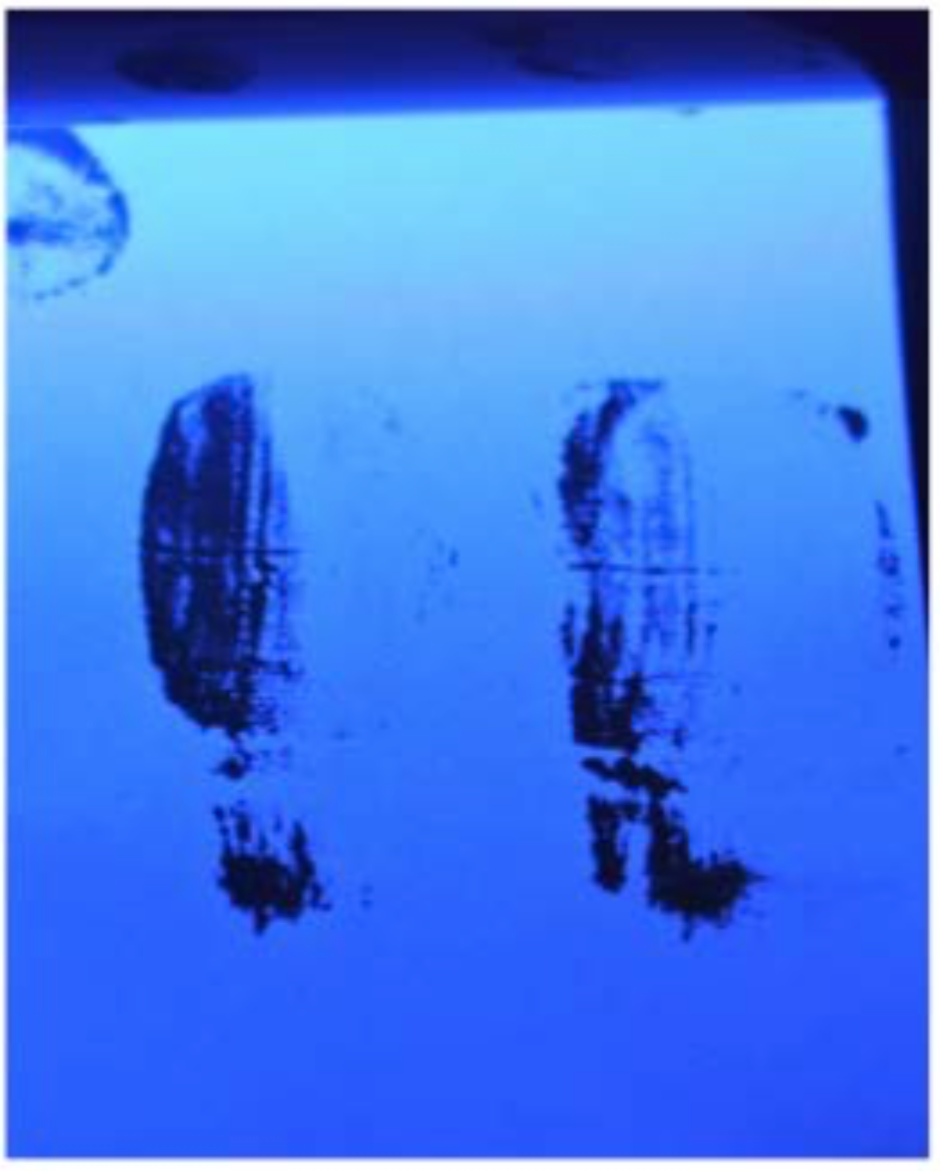Fingerprints in white emulsion paint. Fluorescing black 2.png