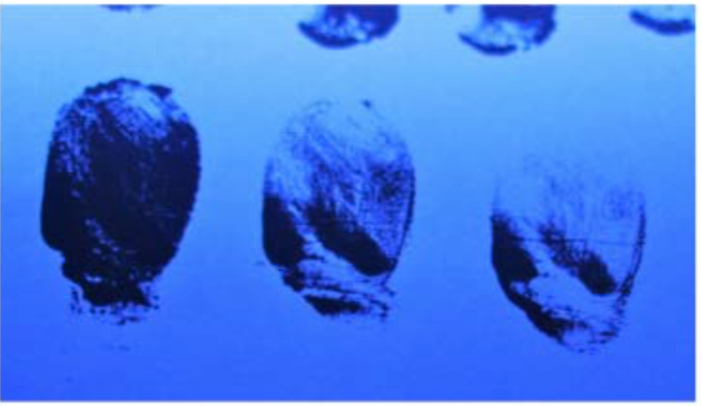 Fingerprints in white emulsion paint. Fluorescing black 3.png