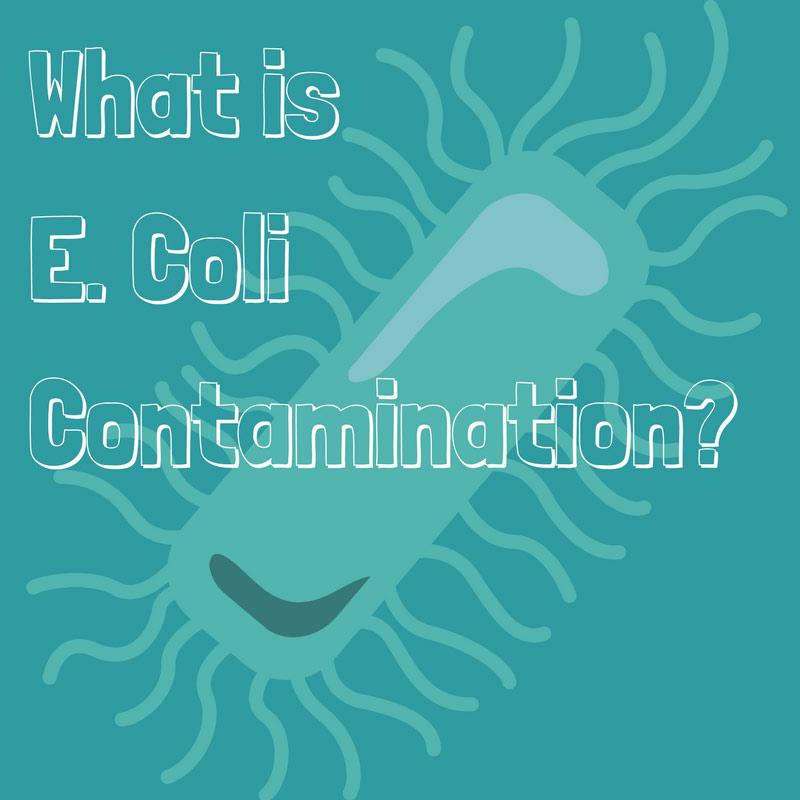 What is e. Coli Contamination?